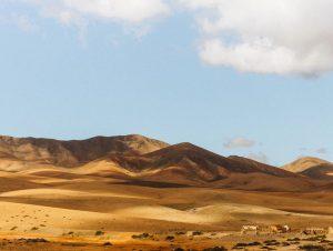 Bilutleie & leiebil Fuerteventura lufthavn